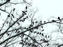 Wiele ptaki na drzewie Zdjęcia Royalty Free