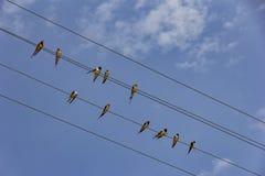 Wiele ptaki siedzą na linia energetyczna kablu Fotografia Stock