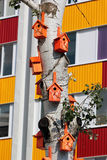 Wiele ptaków domy na osikowym drzewie Fotografia Stock