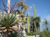 Wiele różnorodni kaktusy różny rozmiar Kultywacja kaktusy zdjęcie royalty free