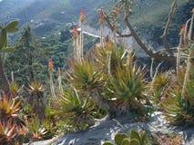 Wiele różnorodni kaktusy różny rozmiar Kultywacja kaktusy fotografia royalty free