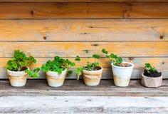 Wiele rośliny na drewnie Obrazy Royalty Free