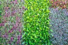 Wiele rodzaje roślina na ścianie jako tło Obrazy Royalty Free