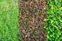 Wiele rodzaje roślina na ścianie jako tło Fotografia Stock