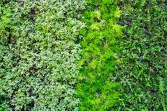 Wiele rodzaje roślina na ścianie jako tło Obraz Royalty Free