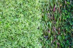 Wiele rodzaje roślina na ścianie jako tło Zdjęcie Royalty Free