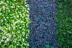 Wiele rodzaje roślina na ścianie jako tło Zdjęcie Stock