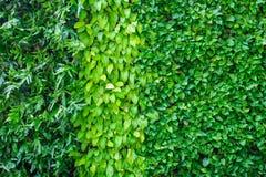 Wiele rodzaje roślina na ścianie jako tło Zdjęcia Stock
