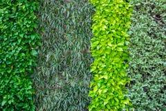 Wiele rodzaje roślina na ścianie jako tło Obrazy Stock