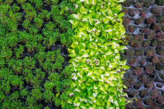 Wiele rodzaje roślina na ścianie jako tło Obraz Stock