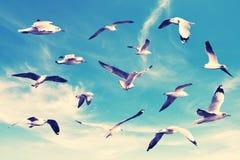 Wiele seagull latanie na wśród nieba zdjęcie royalty free