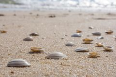Wiele skorupy na świetnej piaskowatej plaży obrazy royalty free