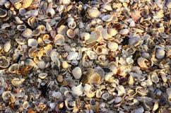 Wiele skorupy na plaży zdjęcie royalty free