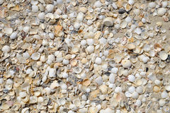 Wiele skorupy na plaży Zdjęcie Stock