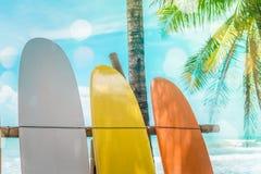 Wiele surfboards obok kokosowych drzew przy lato plażą z słońcem zaświecają obraz royalty free