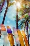 Wiele surfboards obok kokosowych drzew przy lato plażą z słońcem zaświecają obraz stock