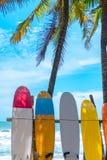 Wiele surfboards obok kokosowych drzew w lato plaży z słońca niebieskiego nieba i światła tłem obraz stock