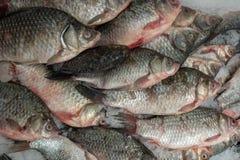 Wiele surowi ścierwa rybi karp na lodzie zdjęcia royalty free