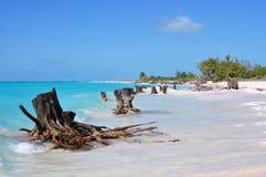 Wiele susi fiszorki na brzeg szmaragdowy morze piękne wysp brytyjskich wysp raju piasku palm piaskowatych kawałki drzewa w kolorz Obrazy Stock