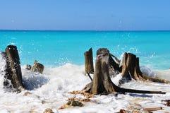 Wiele susi fiszorki na brzeg szmaragdowy morze piękne wysp brytyjskich wysp raju piasku palm piaskowatych kawałki drzewa w kolorz Fotografia Stock