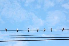 Wiele swiftlets na magistrali drucie pod niebieskim niebem. Obraz Stock