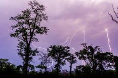 Wiele uderzenia pioruna podczas dramatycznej burzy z las tropikalny drzewnymi sylwetkami w przedpolu, Cameroon, Afryka Obraz Stock