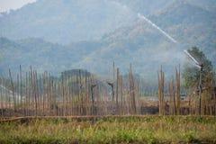 Wiele zielone kapusty w rolnictw polach przy Phutabberk Phet Zdjęcia Stock
