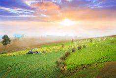 Wiele zielone kapusty w rolnictw polach przy Phutabberk Phetchabun, Tajlandia zdjęcie stock