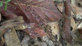 Wiele ziemni termity na drzewnych liściach zbiory