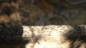 Wiele ziemni termity na gałąź zbiory wideo
