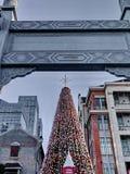 Wielka duża choinka przy kątem ulica Fotografia Royalty Free