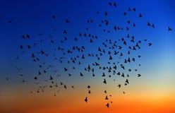Wielka grupa ptaki. Obrazy Stock