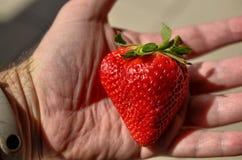Wielka jaskrawa czerwona truskawka zdjęcia royalty free