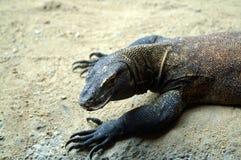 Wielka jaszczurka na lekkim tle Fotografia Stock