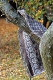 Wielka koc z szarymi rogaczami wiesza na drzewie w parku na tle żółci liście fotografia stock