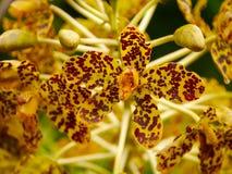 Wielka orchidea w świacie Zdjęcia Royalty Free