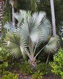 wielka paprociowa roślinnych Obraz Royalty Free