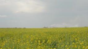 Wielka roślina z dymem od drymb zbiory wideo