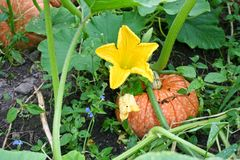 Wielka spadku warzywa bania Fotografia Royalty Free