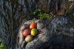 Wielkanoc barwił jajka i drzewa w wiosna słonecznym dniu Fotografia Stock