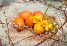 Wielkanoc barwił jajka na drewnianym stojaku z wierzbowymi gałązkami Obrazy Stock