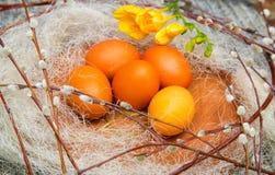Wielkanoc barwił jajka na drewnianym stojaku z wierzbowymi gałązkami Obraz Royalty Free