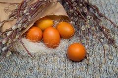 Wielkanoc barwił jajka w papierowej torbie z gałąź kici wierzba Zdjęcia Royalty Free