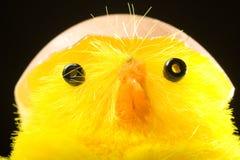 Wielkanoc chickne zabawka Obrazy Royalty Free