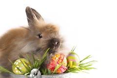 Wielkanoc - dziecko króliki i Easter jajka Zdjęcia Royalty Free