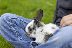 Wielkanoc dziewczyna królika Zdjęcia Stock