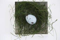 wielkanoc jaj green trawy Obraz Stock