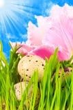 wielkanoc jaj kwiat Fotografia Royalty Free