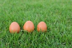 Wielkanoc, jajka na trawie Obrazy Stock