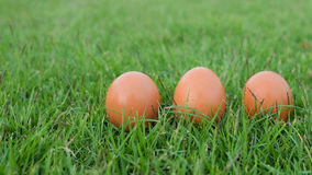 Wielkanoc, jajka na trawie Zdjęcia Royalty Free